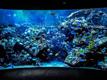 El acuario mas grande del mundo